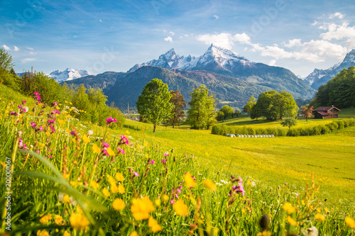 Poster Honey Idyllic mountain scenery in the Alps with blooming meadows in springtime