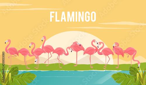 Set of flamingos on background. illustration.