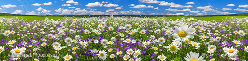 Deurstickers Beige spring landscape panorama with flowering flowers on meadow