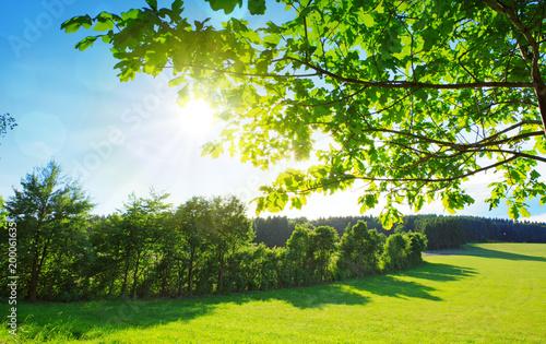 Staande foto Lente Green branch and sun shining through tree.