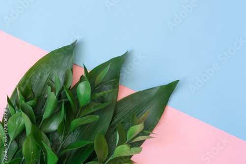 Fotografering  Tropical decorative leaves on a pink background