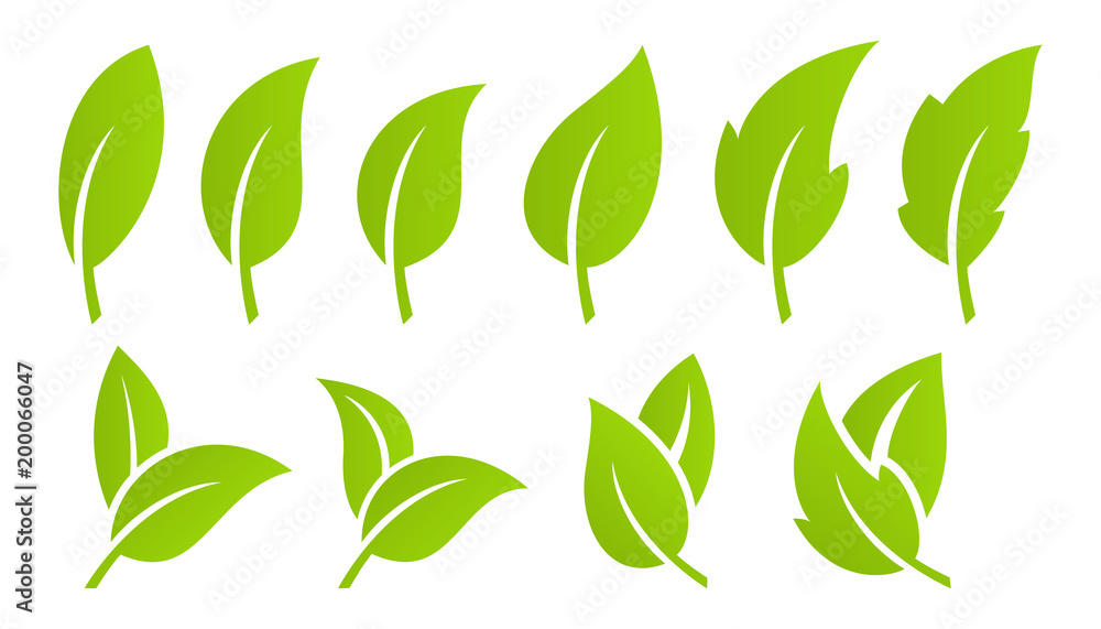 Fototapety, obrazy: Green leaf set. Eco