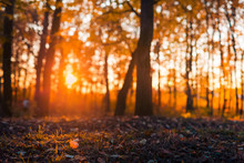 Autumn Landscape And Colorful Leaves In Sun Rays And Blurred Bokeh Background