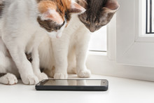 Two Cats Sit On The Windowsill And Look At The Smartphone Screen