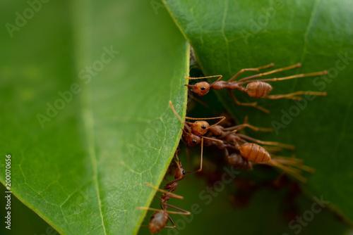 Foto op Plexiglas Textures red ant