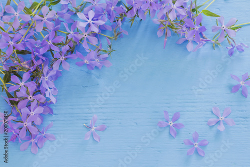 Canvas Print periwinkle on  wooden background