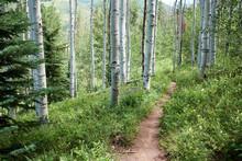 Hiking Trial Or Footpath Throu...