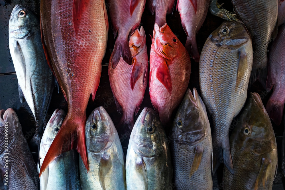 Fresh fish in the market close up. Buy marine food in local shop
