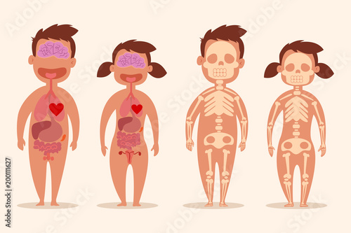 Human Internal Organ Male And Female Skeletons Anatomy Of The Body