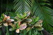 canvas print picture - Tropical garden with palm tree and croton, close up.