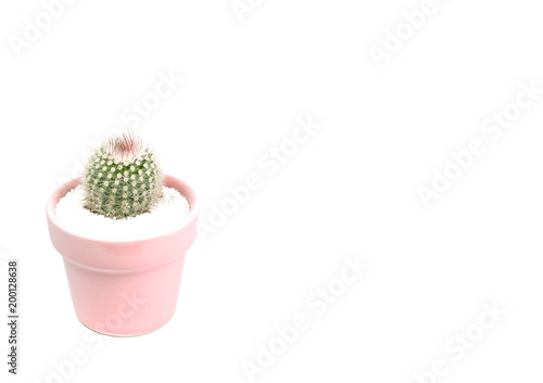 Deurstickers Cactus Small cactus in a flowerpot isolated on white background.
