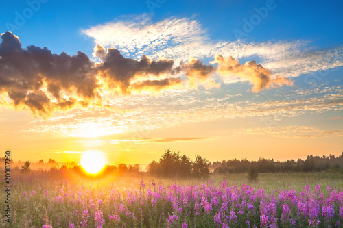 Foto op Plexiglas Cappuccino rural landscape with sunrise and blossoming meadow