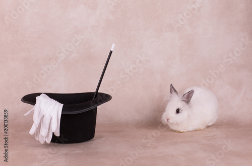 white rabbit in a black hat and a magic wand