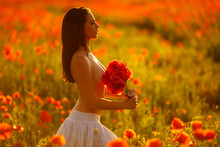Portrait Of A Sexy Woman In A Poppy Field At Sunset On A Background Of Poppies, Holding A Bouquet Of Flowers From Poppies. Romantic Girl In The Sun