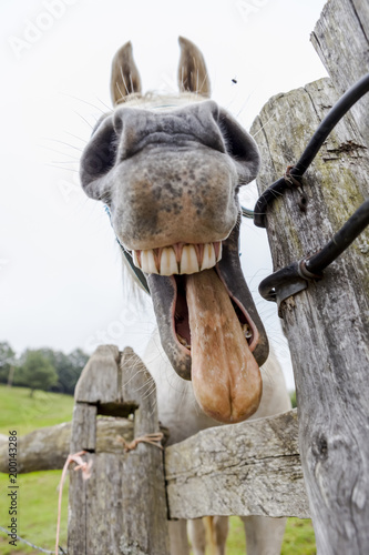 Deurstickers Ezel whinnying horse