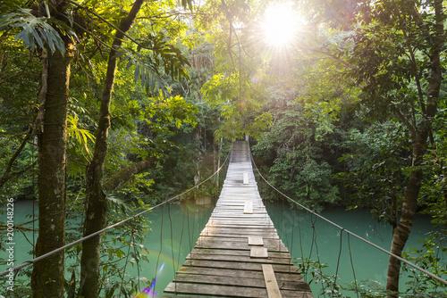 Poster de jardin Route dans la forêt Tranquil Forest Footbridge