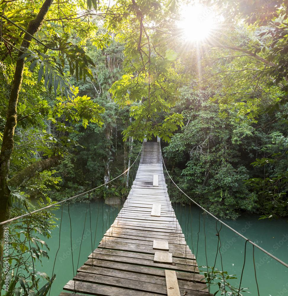 Kładka leśna w tropikach
