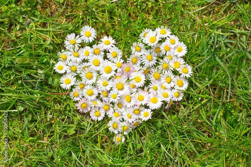 Foto op Canvas Madeliefjes Ein Herz aus Gänseblümchen