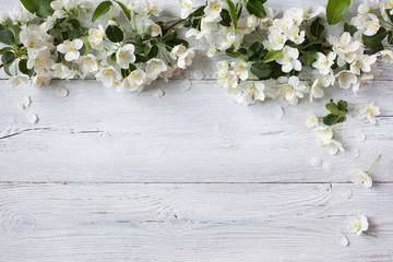 Panel SzklanyWhite wooden background with white flowering spring branches