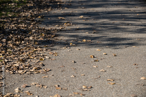 Dried leaves fallen on the road