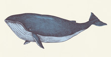 Hand Drawn Blue Whale Retro St...
