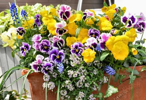 Papiers peints Pansies カラフルな春の花の寄せ植え