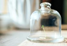 Plant Under Glass Jar