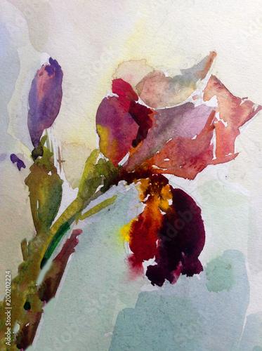akwarela sztuka tło kwiatowy egzotyczny wiosna tęczówki kwiaty kwitną obraz jasny teksturowane dekoracji ręka piękny kolorowy delikatny romantyczny