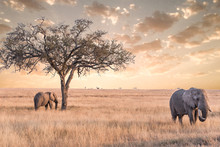 Elephant In Serengeti National...