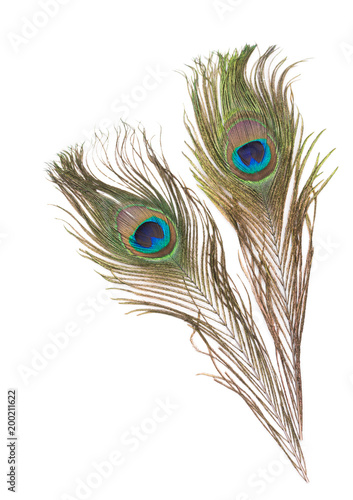 Foto op Aluminium Pauw Peacock feathers on a white background
