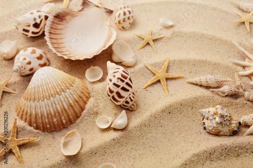 Fotografie, Obraz  seashells on sand beach