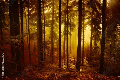 magicznego-ranek-pomaranczowej-czerwieni-lasu-krajobrazowy-barwiony-mglowy-drz
