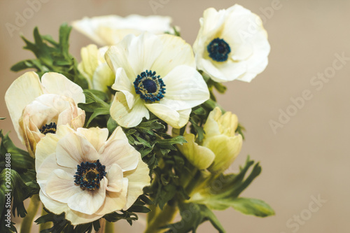 Tuinposter Bloemen Bouquet of white anemones on a beige background. Copy space.