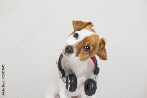 portrait of a cute small dog sitting on white floor and using a headset. He is looking at the camera. Pets indoors, home or studio. lifestyle. Dj concept