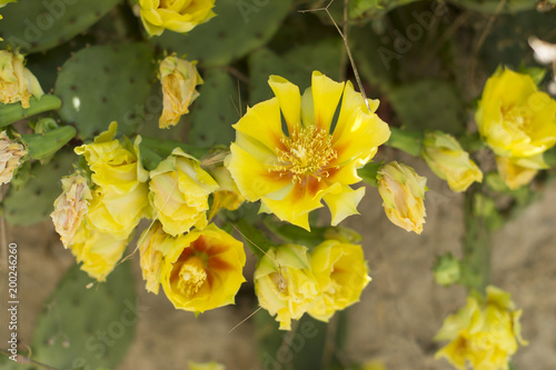 Tuinposter Bloemen çiçek bahçeleri