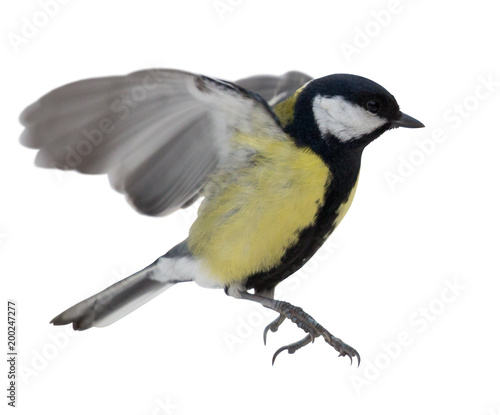 In de dag Vogel photo of flying isolated great tit