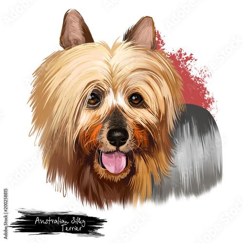 Australian Silky Terrier Dog Breed Digital Art Illustration Isolated