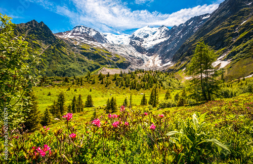 Alps Wild Nature Blossoming Meadow Under The Mont Blanc Glacier Ideal For Wallpaper Or