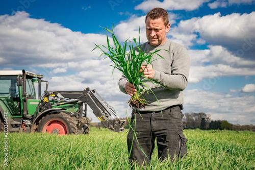 Fotografie, Obraz  Ackerbau - Getreidefeld, Landwirt überprüft Bestandsentwickung