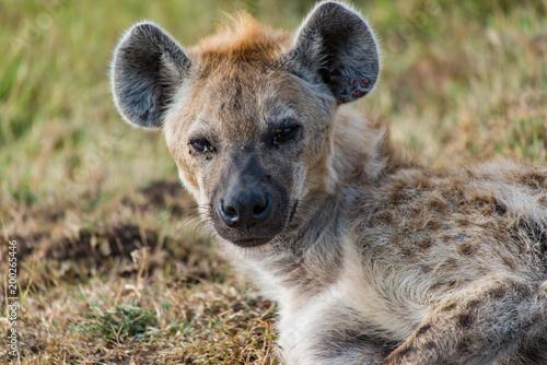 Fotobehang Hyena Hyena Portrait