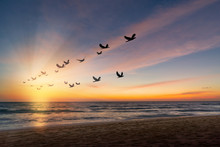 The Freedom Of Birds,freedom Concept.Silhouette Flock Of Birds Flying Over The Sea At Sunset With Sunray.