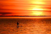 Paddle Boarder At Sunset On Bay