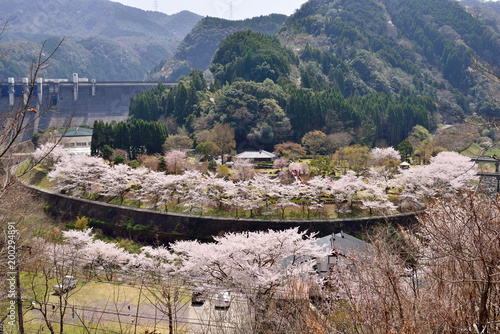 Papiers peints Cappuccino 渓石園の桜