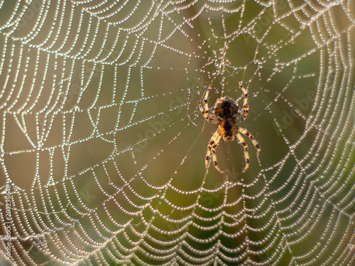 Papel de parede spider web covered in dew