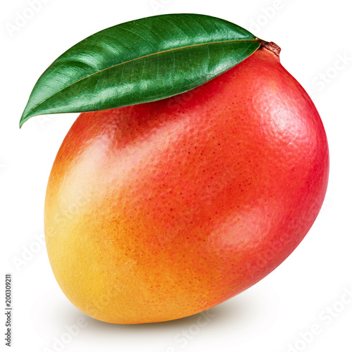 Mango leaf isolated