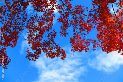 Fotobehang Rood paars 秋の遊歩道と公園の風景11