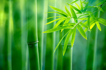 Obraz na Szkle Bamboo forest