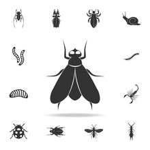 Fly. Detailed Set Of Insects I...