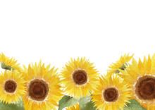 ひまわり 夏 花 背景 フレーム 水彩 イラスト