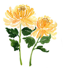Two Sketch Watercolor Yellow C...